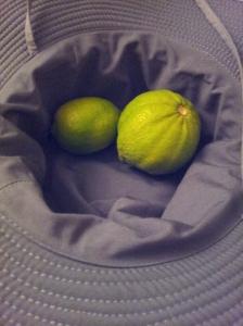 Ohne Früchte geschenkt zu bekommen, kommt man derzeit kaum davon, wenn man an palästinenischen Plantagen vorbei wandert. Hier Zitronen von Malik aus Naqura.